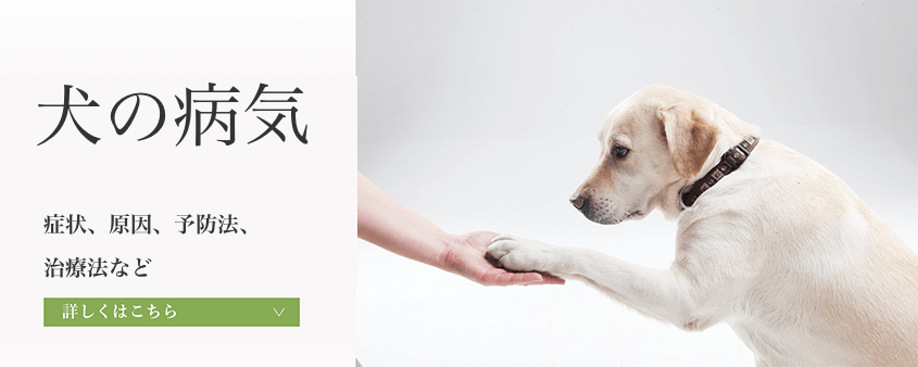 犬の病気 犬の症状、原因、治療法、予防法など犬の病気を紹介しています